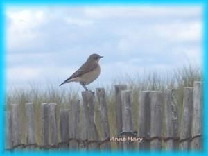 oiseau aux kaolins